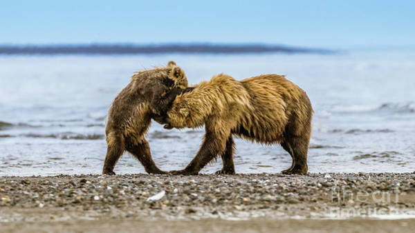 Photograph - Coastal Brown Bears by Lyl Dil Creations