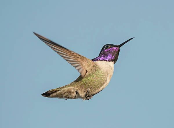 Photograph - Costas Flight by Loree Johnson