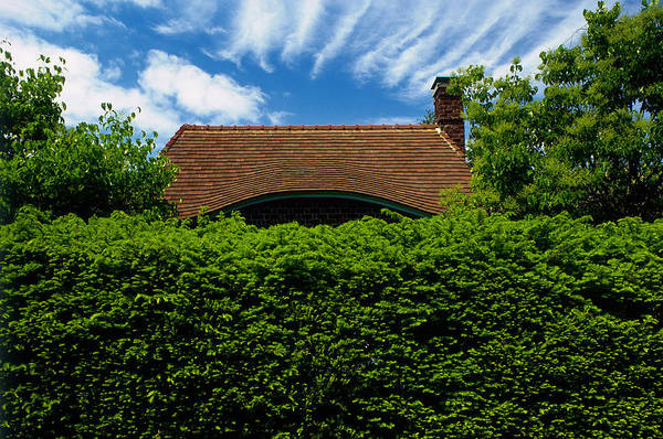 Hiding Photograph - Cottage Behind Yew Taxus Baccata Hedge by Richard Felber