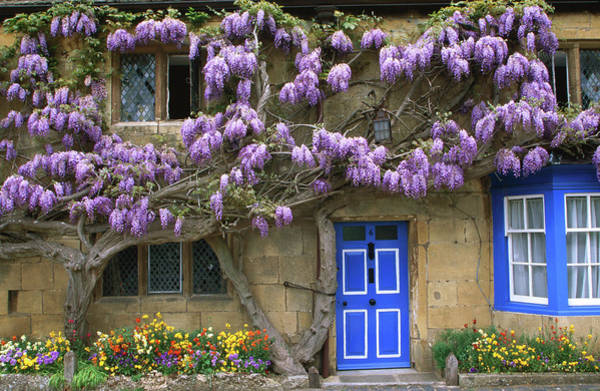 Wisteria Wall Art - Photograph - Cottage With Wisteria In Flower by Barbara Van Zanten