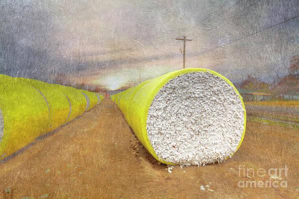 Wall Art - Digital Art - Cotton Is King by Larry Braun