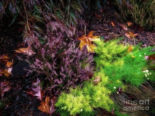 Photograph - Cotton Lavendar by Jon Burch Photography