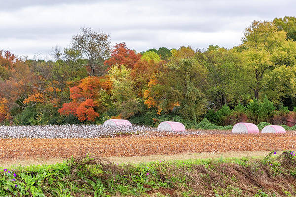 Photograph - Cotton Rolls In The Fall by Jack Peterson