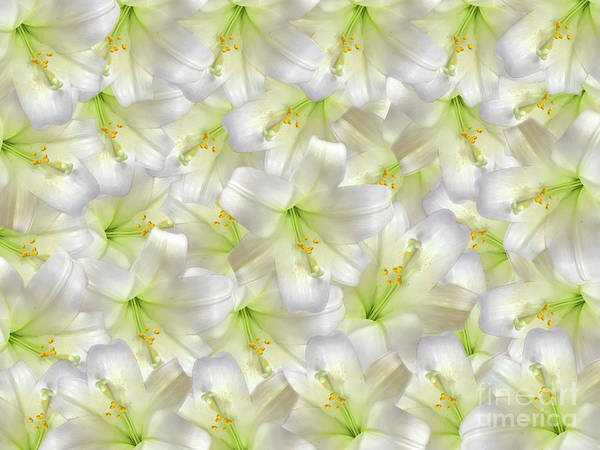 Photograph - Cotton Seed Lilies by Rockin Docks