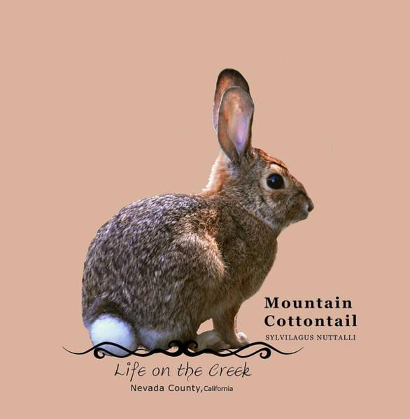 Digital Art - Cottontail Rabbit by Lisa Redfern