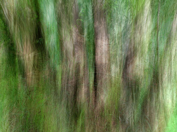 Wall Art - Photograph - Cottonwood 2 by Marilyn Hunt