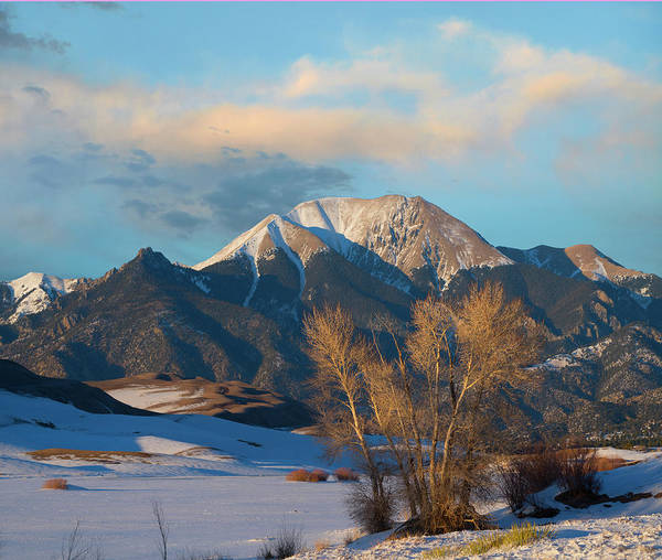 Photograph - Cottonwoods In Winter, Mount Herard by