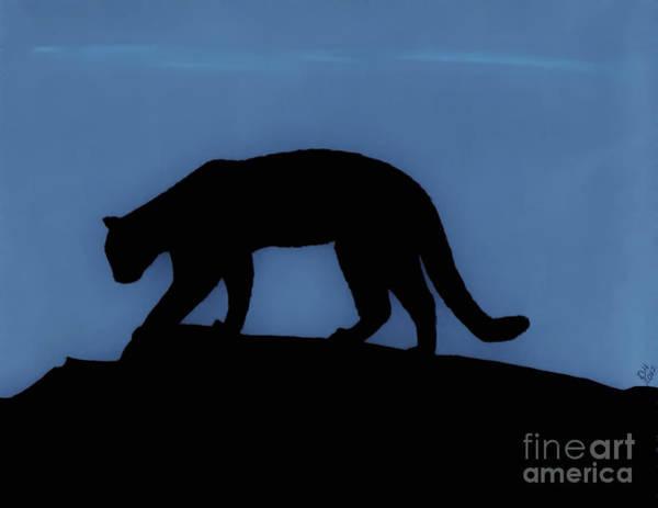 Drawing - Cougar - At - Night by D Hackett