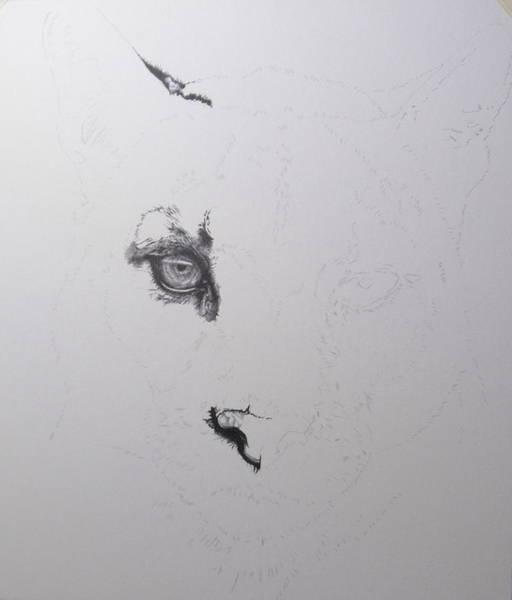 Drawing - Cougar Day 2 by Barbara Keith