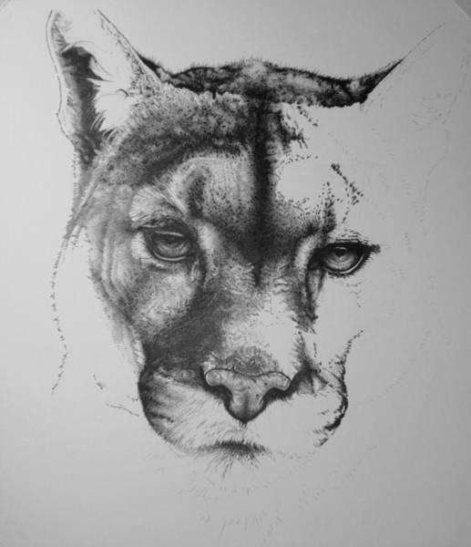 Drawing - Cougar Day 21 by Barbara Keith