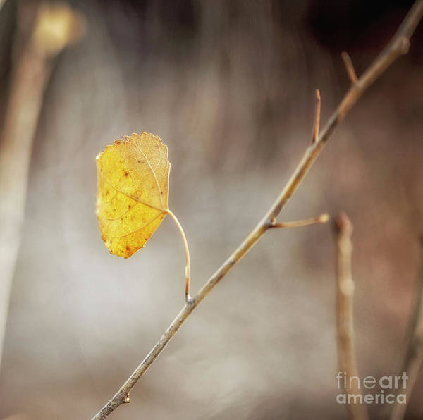 Photograph - Could Never Be by Natural Abstract Photography
