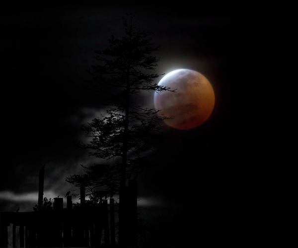 White Wolf Photograph - Country Bay Moon by Betsy Knapp
