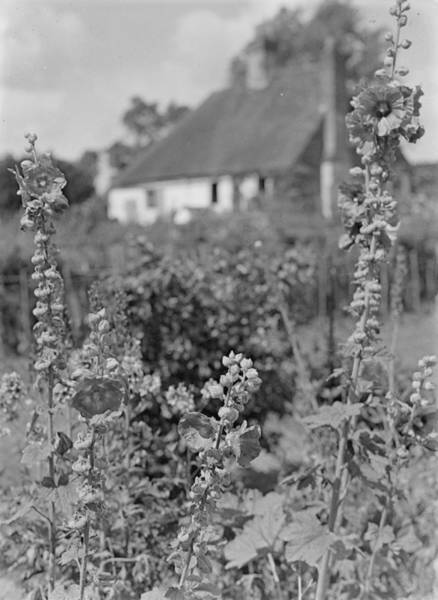 Hollyhock Photograph - Country Cottage by Chaloner Woods