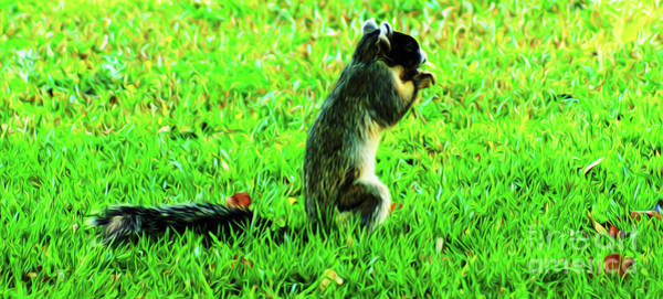 Photograph - Country Fox Squirrel by Kim Pate