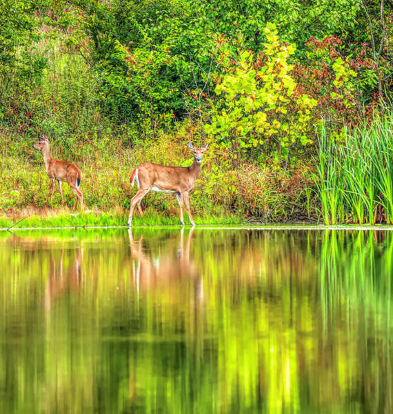 Photograph - Country Lake Morning Reflections by Dan Sproul
