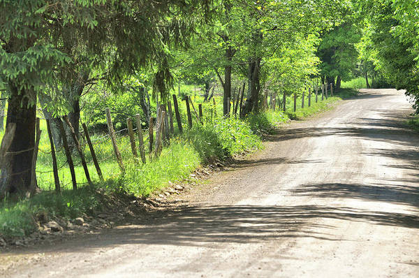 Photograph - Country Lane by JAMART Photography