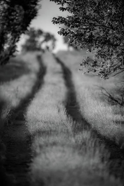 Photograph - Country Lane by Jeff Phillippi