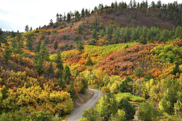 Photograph - Country Road Fall Colors Near Ridgway Colorado by Ray Mathis