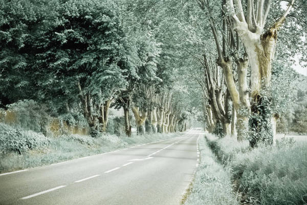 Straight Photograph - Country Road Lined With Sycamore Trees by G.g.bruno