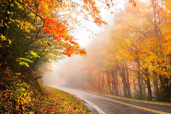 Photograph - Country Roads In The Rain by Debra and Dave Vanderlaan