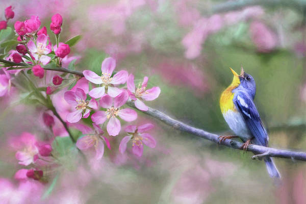 Chirping Photograph - Country Singer by Lori Deiter