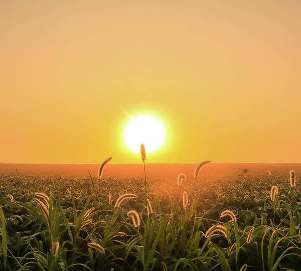 Photograph - Country Sunshine by Dan Sproul
