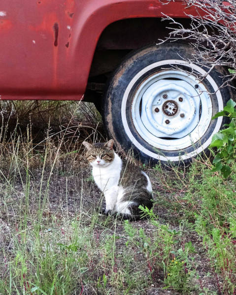 Wall Art - Photograph - Country Tabby Cat By The Wheel by Jennifer Gonzales