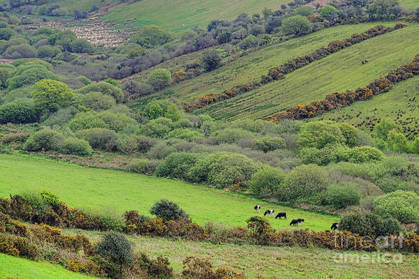Wall Art - Photograph - County Kerry Landscape by Olivier Le Queinec