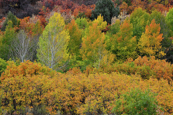 Photograph - County Road Fall Colors Near Ridgway Colorado by Ray Mathis