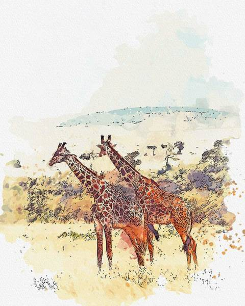 Wall Art - Painting - Couple Giraffe, Africa -  Watercolor By Ahmet Asar by Ahmet Asar
