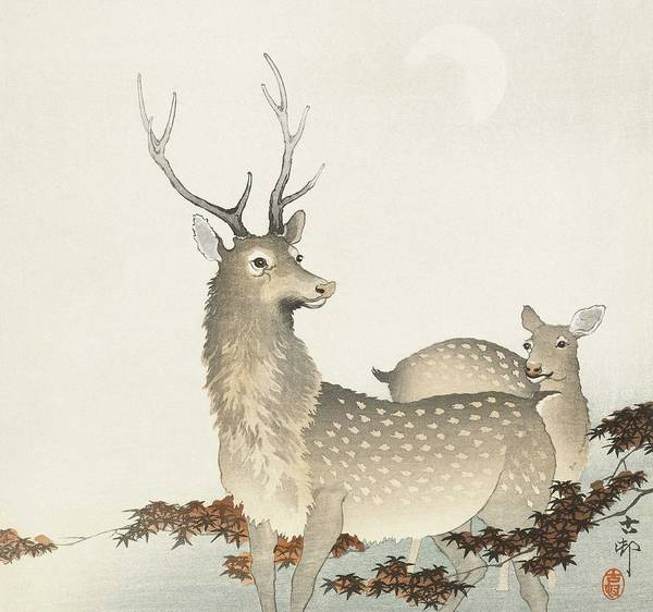 Wall Art - Painting - Couple Of Deers  1900   1930 By Ohara Koson  1877 1945  by Celestial Images