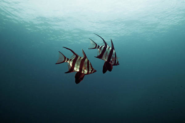 Underwater Photograph - Couple Of Fish by Underwater Graphics