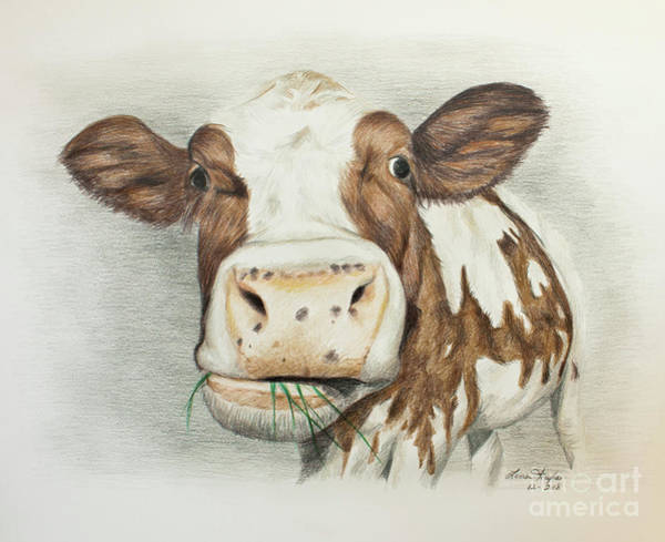 Wall Art - Drawing - Cow Eating Breakfast by Lena Auxier