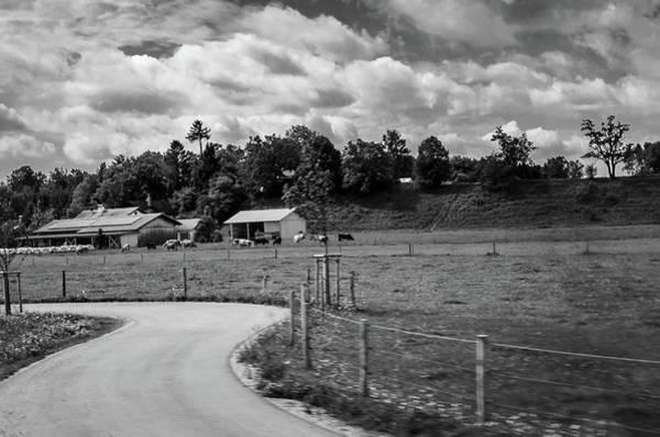 Photograph - Cow Farm by Borja Robles
