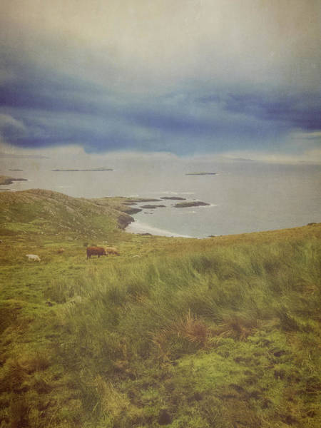 Sea Cow Photograph - Cow In Landscape, Ireland by Christina Reichl Photography