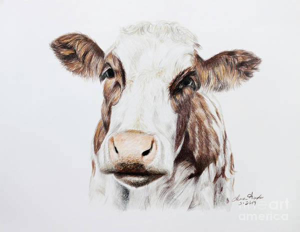 Wall Art - Drawing - Cow by Lena Auxier