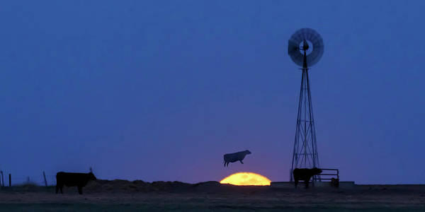 Photograph - Cow Over The Moon 01 by Rob Graham