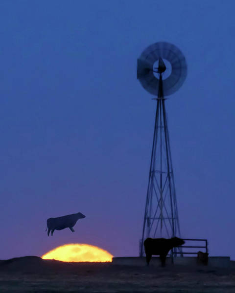 Photograph - Cow Over The Moon 02 by Rob Graham