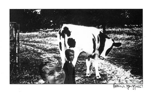 Photograph - Cow With Children by Patricia Youngquist