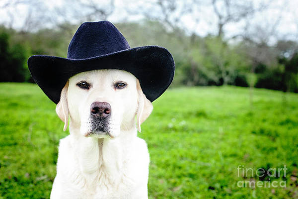 Wall Art - Photograph - Cowboy Dog by Sherry Harvie