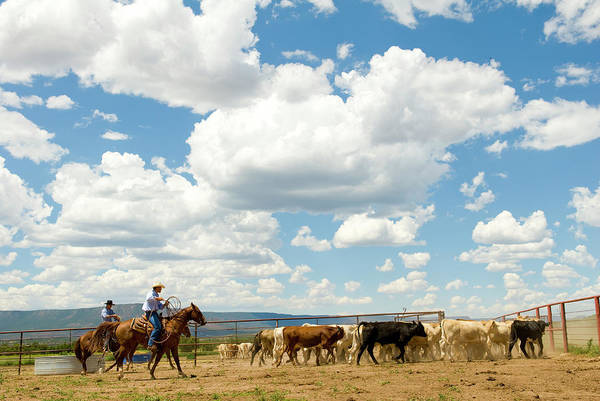 Ranch Photograph - Cowboys And Cattle At Ranch by Nicolas Russell