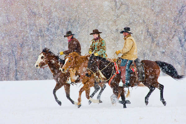 Photograph - Cowboys And Cowgirl Riding Snowfall by Danita Delimont