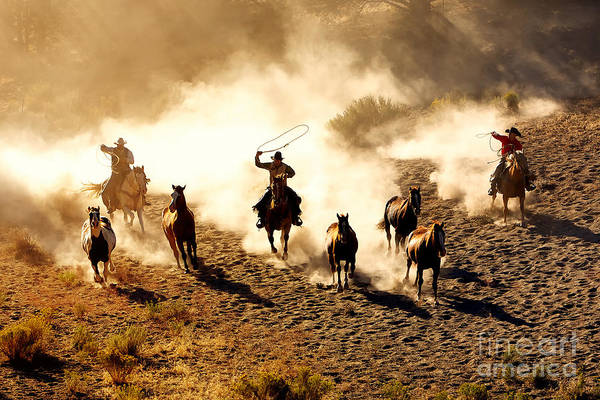 Wall Art - Photograph - Cowboys Chasing Wilding Horses. Roping by Jeanne Provost