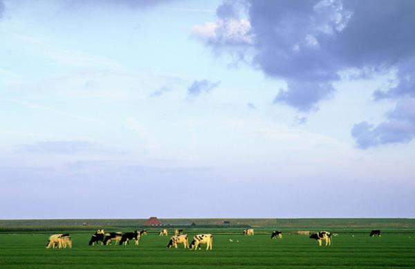 Wall Art - Photograph - Cows And Sky by Jacobh