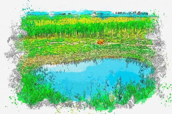 Painting - Cows Around Swamp  And Reeds Watercolor By Ahmet Asar by Celestial Images