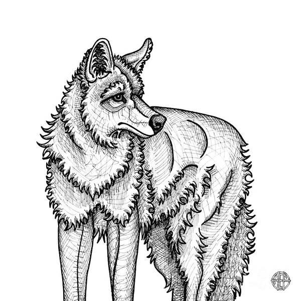 Coyote Art Print