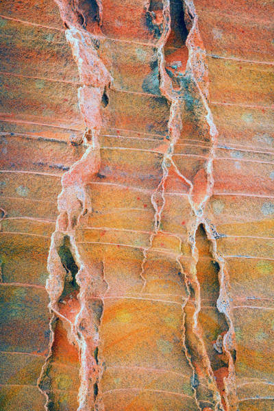 Wall Art - Photograph - Coyote Buttes Fins by Johnny Adolphson