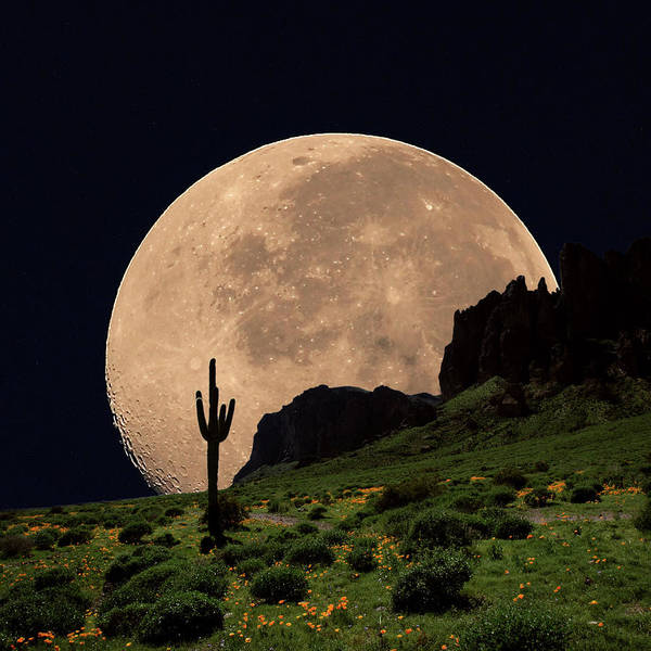 Photograph - Coyote Moon Southwestern Cactus Mountain by Dusty Pixel Photography