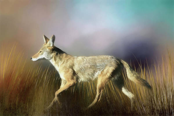 Photograph - Coyote On The Move by Donna Kennedy