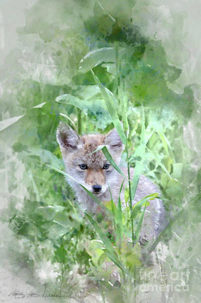 Photograph - Coyote Pup by Brad Allen Fine Art